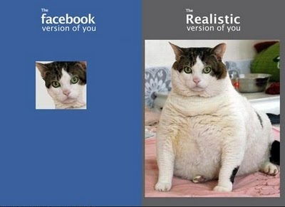 facebook vs realtà gatto
